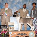 Ch. Spawn at 12 months old - Best of Winners - Rio Grande Kennel Club 1 - 2016